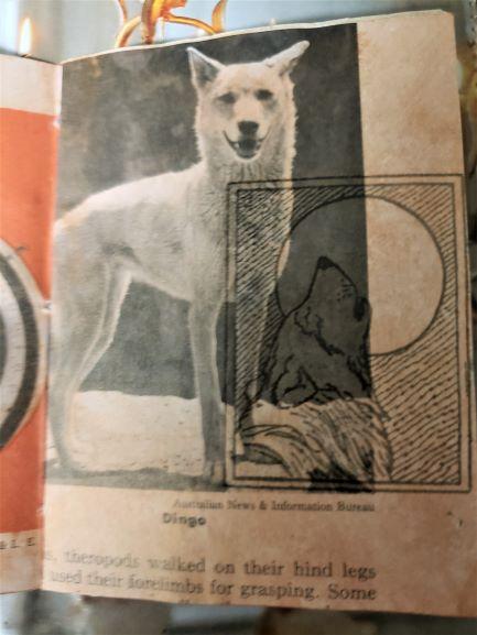 Diogenes Lantern dingo wolf resized  20200825_052126